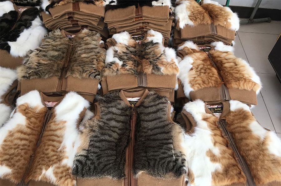 The Sickening Trade of Catskin and Cat Fur from China is Growing